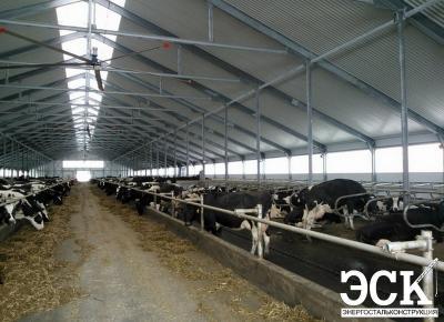Коровник 24х102 с доильно-молочным блоком